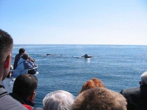 Maine Whale_Watching cruises